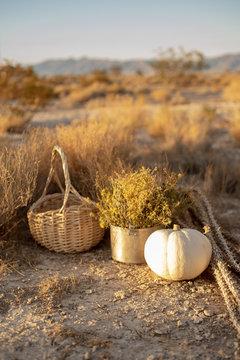 white pumpkin in autumn desert scene with woven basket, wildflowers, dried plants