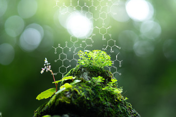 Plants background with biochemistry structure. Wall mural