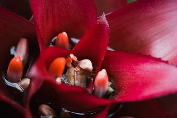 red orchid flower close-up photo