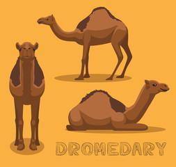 Camel Dromedary Cartoon Vector Illustration