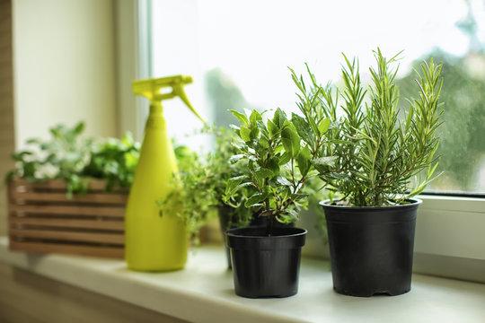 Pots with fresh aromatic herbs on windowsill