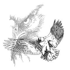 Eagle line Vector