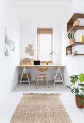 Brown rug and plant in white workspace interior with window above desk and chair. Real photo