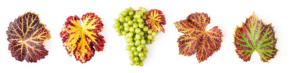 Green grape and autumn leaves set