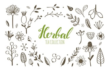 Herbal tea and floral doodle set. Vector