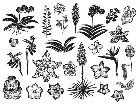 Exotic and tropical flowers black silhouette isolated on white background. Hand drawn vector blossom.