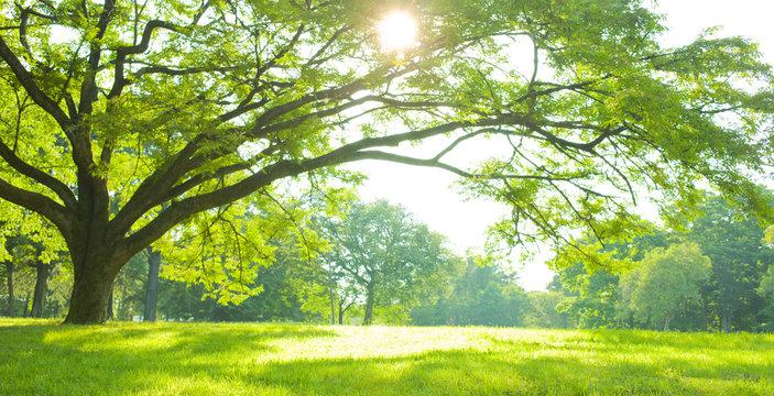 Park tree