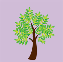 different and beautiful trees vector illustration