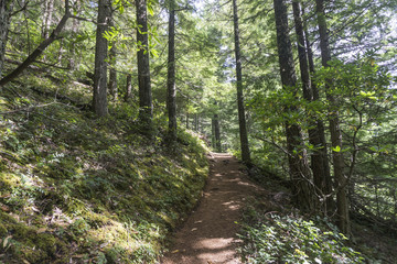 Hiking trail through a green forest