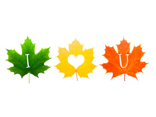 colored maple leaves labeled I love you. isolated on white background