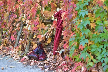shoes for autumn leaves