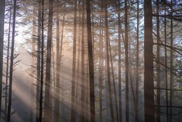 Keuken foto achterwand Bos in mist Nature
