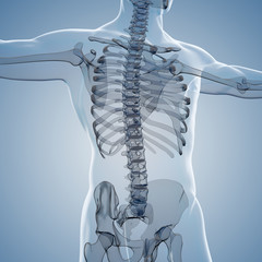 3d render of human body and skeleton, x-ray