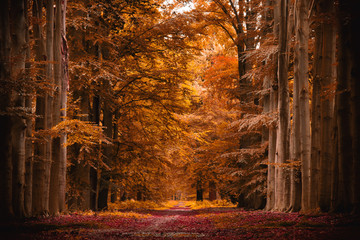 Forest during autumn