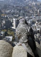Bird and skyscraper,Manhattan New York City