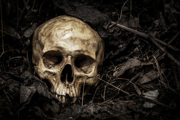 Darkness theme of loneliness and death is Truth of Life. human skull in cemetery on the pile carcass plant and dry leaves on dark background which has dim light and copy space. Wall mural