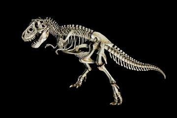 Skeleton Dinosaur Tyrannosaurus ( t-rex ) on black background.