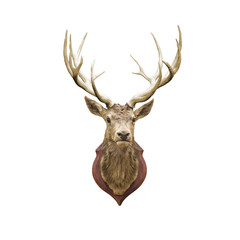 Papiers peints Cerf Stuffed deer head.