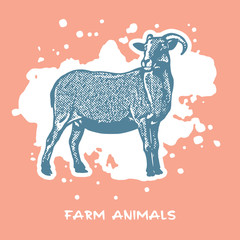 Goat standing - vector graphic illustration. 