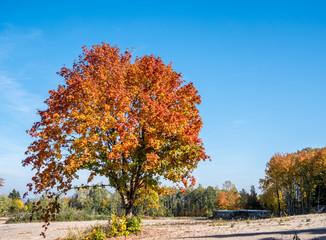 Bunter Baum im Herbst