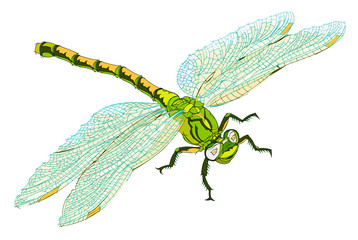 Fantasy illustration of cute dragonfly on white background. Hand-drawn vector image.