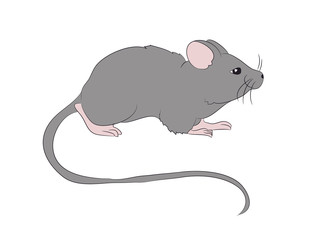 mouse is drawing color, vector