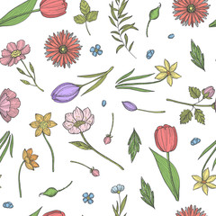 Vector hand drawn flowers pattern or background illustration. Colored plant and flowers