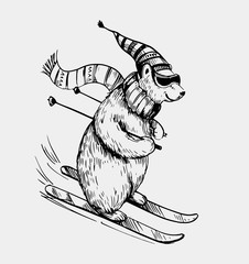 Polar bear skiing. Hand drawn illustration converted tovector