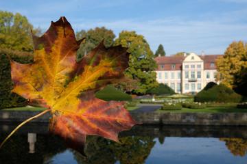 Fototapeta Polska, Gdańsk - jesienne liście w Parku Oliwskim obraz