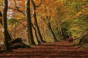 romantischer Herbst Spaziergang im Wald