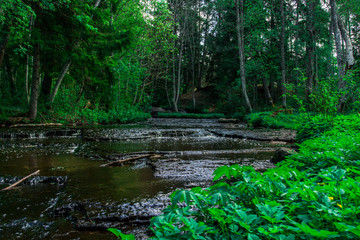 A beautiful small river in the wood