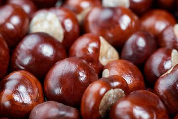 Ripe chestnuts background. Autumn decorations. Autumn concept.