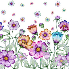 Beautiful cosmos flowers with green leaves on white background. Seamless floral pattern. Watercolor painting. Hand drawn and painted illustration