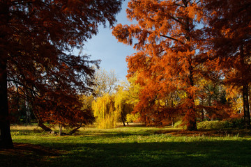 Autumn colorful trees in the park