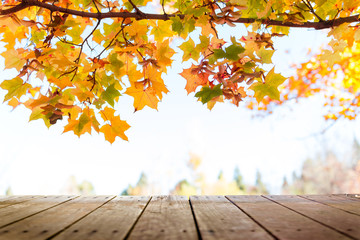 Multi colored autumn tree leaves over wooden deck