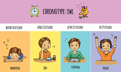Chronotype of people: dove. Typical of the person's daily activity. Daily regime of skylark. Vector illustration of laverock chronotype. Early morning bird people.