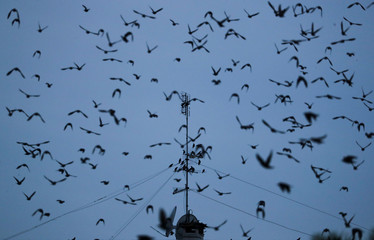 A flock of starlings fills the dusk sky over Rome