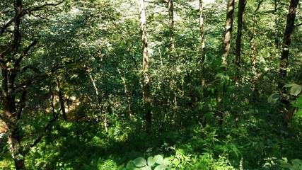 Sarmal sarmal olmuş ağaçlkar