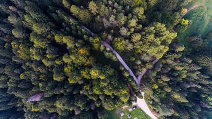 Asiago wood from aerial drone view