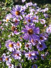 flora