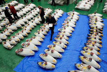 Wholesalers check the quality of frozen tuna displayed during the first tuna auctions on the opening day of the new Toyosu fish market in Tokyo