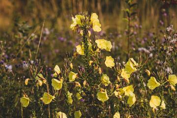 Yellow wildflowers growing in a field