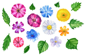 Collection of ten different colorful flowers with leaves. Daisy, gerbera,  cornflower and others. Watercolor hand drawn illustration. Elements for design. Isolated in white background.