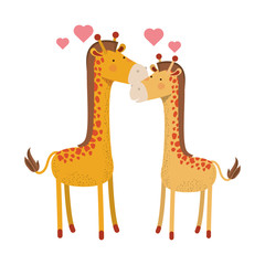 cute couple giraffes with hearts