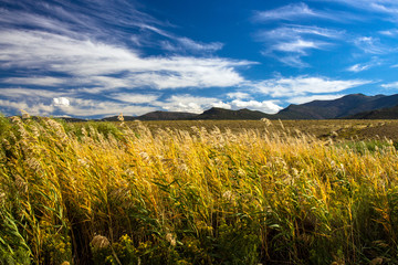 Evening light on marsh grasses in autumn with distant mountains and a gorgeous sky in Browns Park National Wildlife Refuge in northwestern Colorado