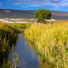 In autumn, a creek or stream passes wetland grasses, gorgeous cliffs, a large cottonwood tree, and mountains in Browns Park National Wildlife Refuge in northwestern Colorado