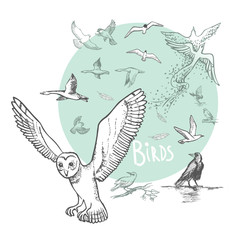 Set of Vector hand drawn birds