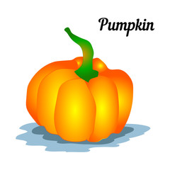 Pumpkin on a white background, design for decoration,