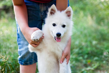 Girl with a puppy white Japanese Spitz is walking in the woods