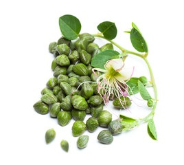 Capers on white background. Caper bud, green leaves and flower